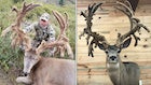 P&Y Club to Consider Potential Velvet World Record Non-Typical Mule Deer