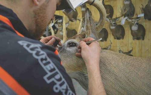 Archery Business 2015 Dealer of the Year S&S Taxidermy has good reason to display mounts wherever they find space. Retailers who do not offer taxidermy services would be better served using that wall space for products and displaying taxidermy sparingly.