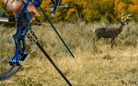 Must-Have Archery Targets for 2017