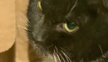 Video: Meet Mr. Rooter — The Cat