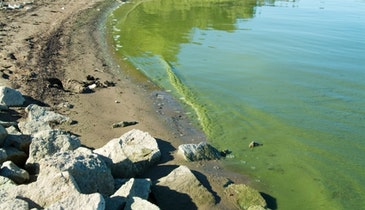 Will Municipal Green Infrastructure Save Lake Erie?