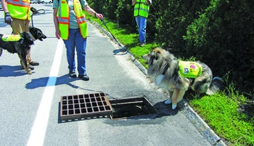 Dogs Detect Wastewater Spills