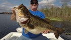 Video: How to Rig Wild Shiners for Trophy Largemouth Bass