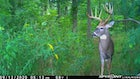 Head-On Shots: Are They Ever Okay for Whitetail Bowhunters?