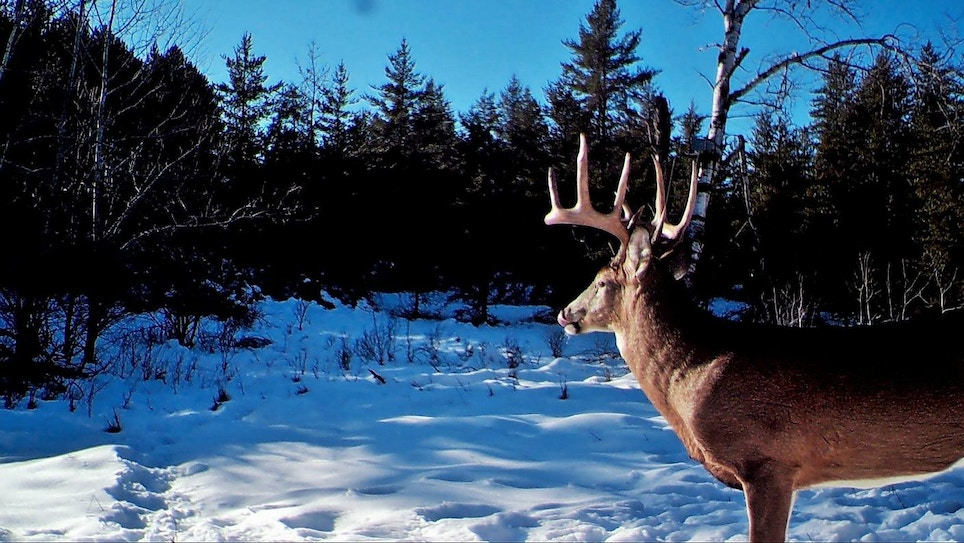 Whitetail Video: Hunting the Second Rut