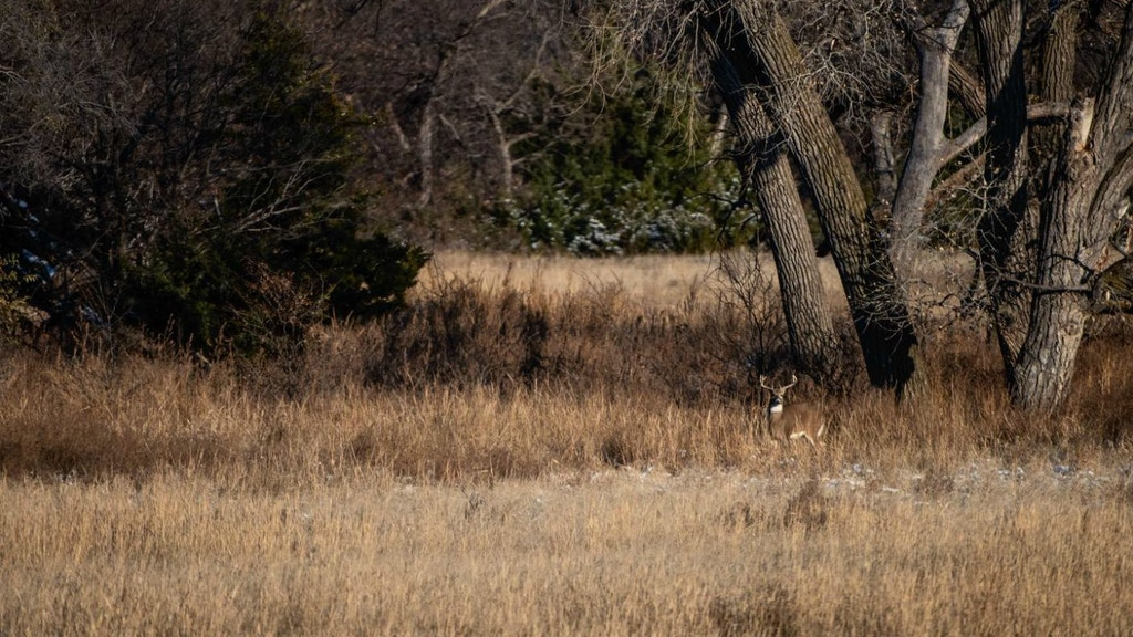 Spot and Stalk Bowhunting for Whitetails