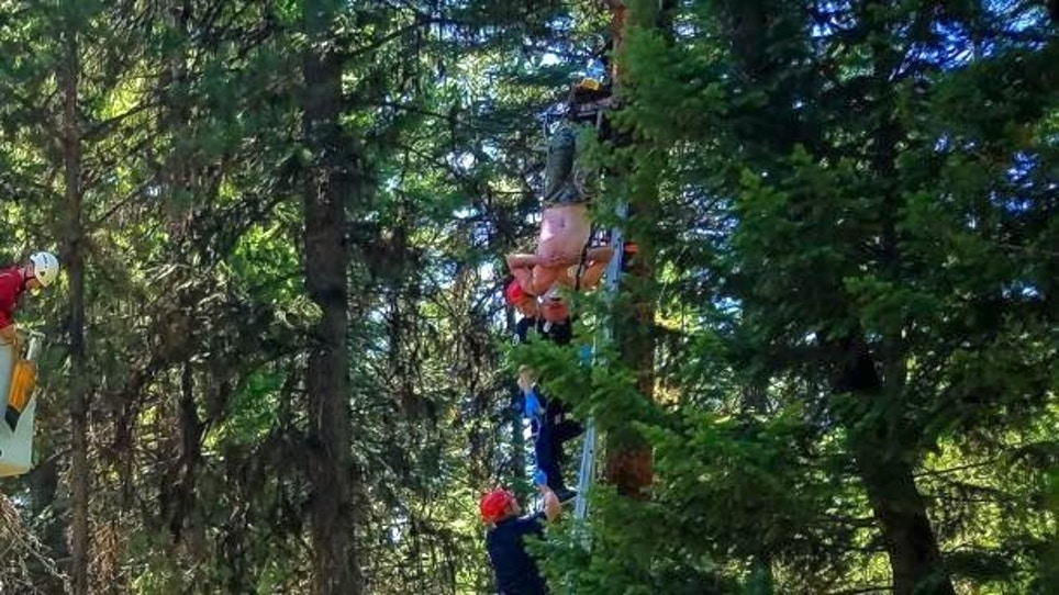 Hunter Hung Upside-Down From Treestand for Two Days