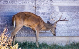 The New York Times drops report on how CWD is threatening deer