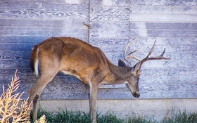 New Research Zeros in on How CWD is Spreading