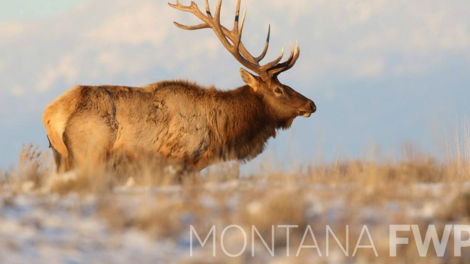 Feeling Lucky? 2018 Montana SuperTag Chances On Sale Now