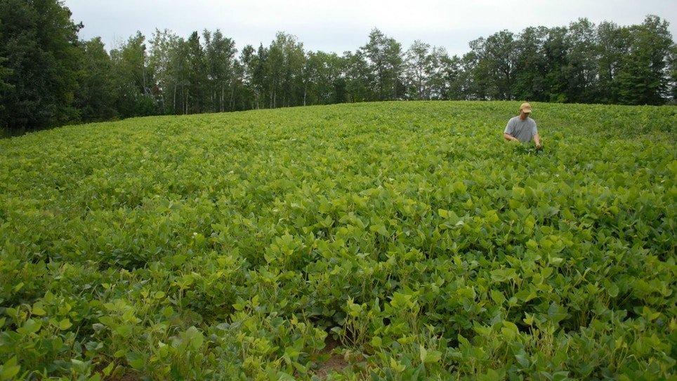 Food Plots: Why I'm Finished Planting Soybeans