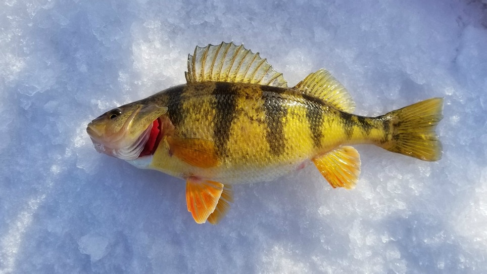 5 Ice Fishing Tips To Catch More Fish