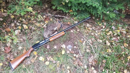 The author's hand-me-down Remington 870 loaded with No. 7.5 shot put meat back on the menu.