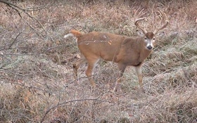 Video: Woman Arrows 200-class Kansas Whitetail at 20 Yards
