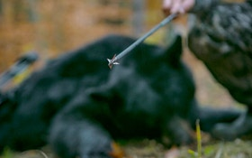 4 Best Fixed-Blade Broadheads for Under $40