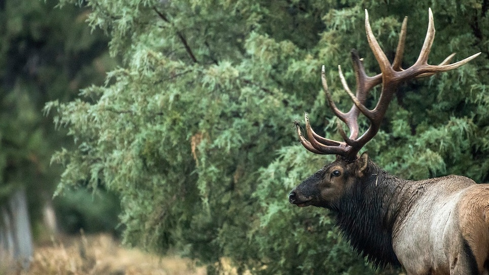 3 Overlooked Archery Tips for Public Land Elk