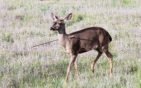 Oregon Hunters, Police Offer Reward for Information on Persons Responsible for Maimed Deer