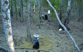 7 Tips for First-Time Bear Hunters