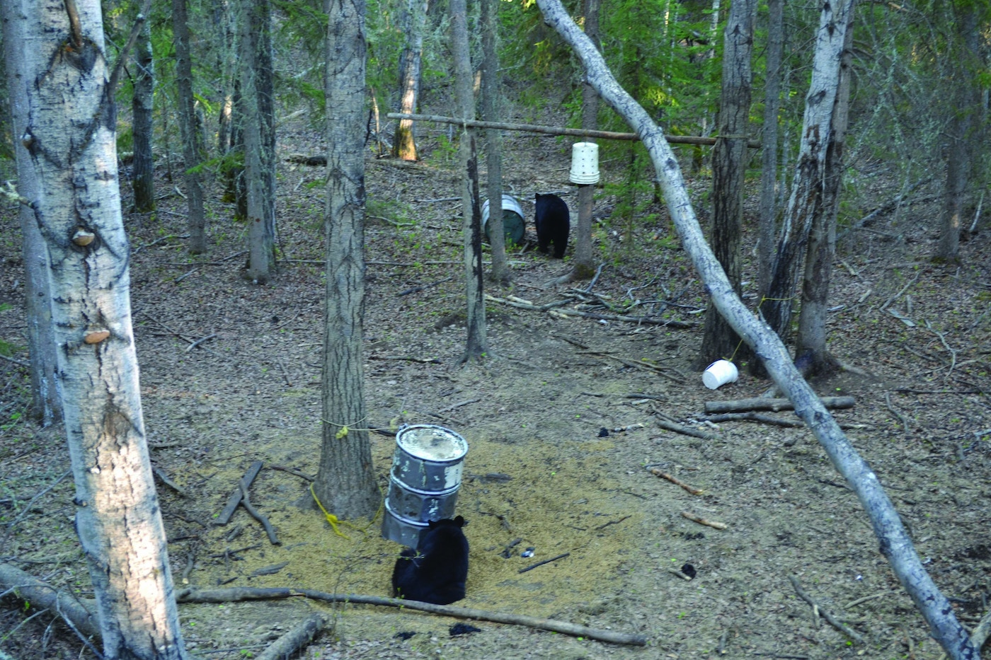 7 Tips for First-Time Bear Hunters | Grand View Outdoors