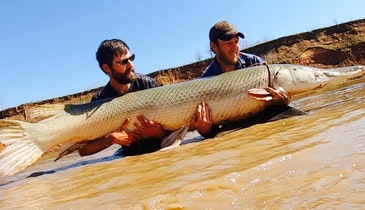 Video: Battling an 8-Foot Alligator Gar
