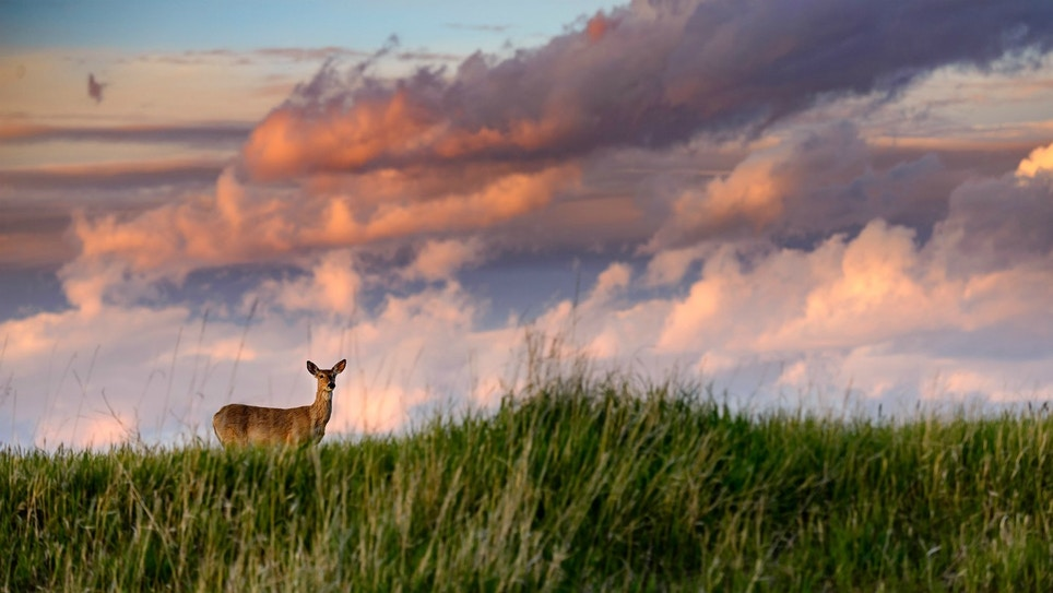 Hunting Whitetails on Private Land — Without Permission?