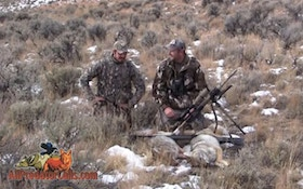 VIDEO: Predator Down Coyote Hunt Four Dogs Called
