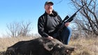 Where to Shoot a Wild Pig