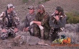 VIDEO: Coyote Hunting With Anything Wild