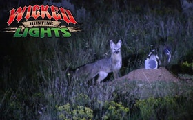 VIDEO: Wicked Lights Night Hunting Fox With Predator Pursuit