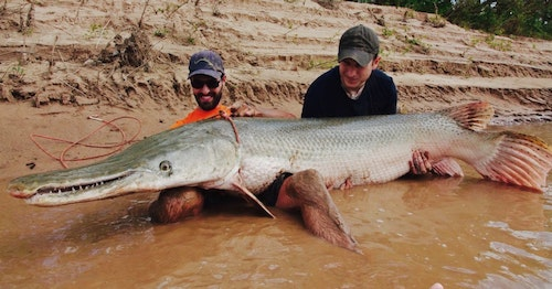 When one of Henry's clients hooks a massive alligator gar and finally brings it up next to the boat, Henry places a rope around the fish to control it. The rope doesn't even leave a mark on the gar's armor-like scales. If you want a good pic of yourself with your prized catch, you'll have to get in the water because Henry never risks harming a giant gar by bringing it into the boat.
