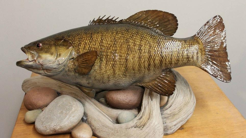 America's Top Fish Taxidermist?