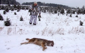 How to Call and Kill More Eastern Coyotes