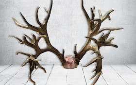 Tennessee Hunter's 47-Point Buck Confirmed New World Record