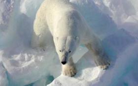 Russian Town Besieged by Polar Bears