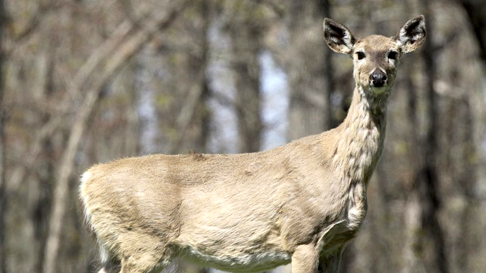 Arkansas GFC hosting public meetings to discuss chronic wasting disease