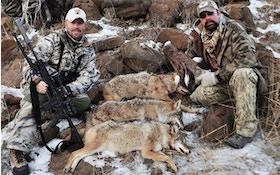 Best Coyote Calls For Winter