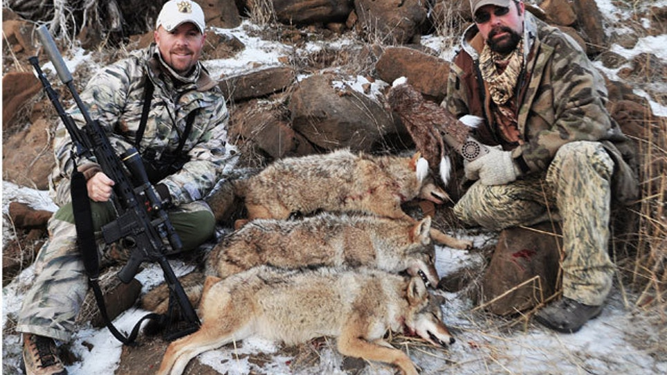 Best Coyote Calls For Winter | Grand View Outdoors