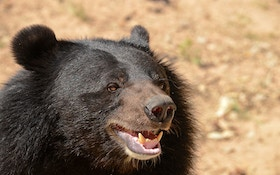 Japanese Man Uses Karate To Fight Off Bear