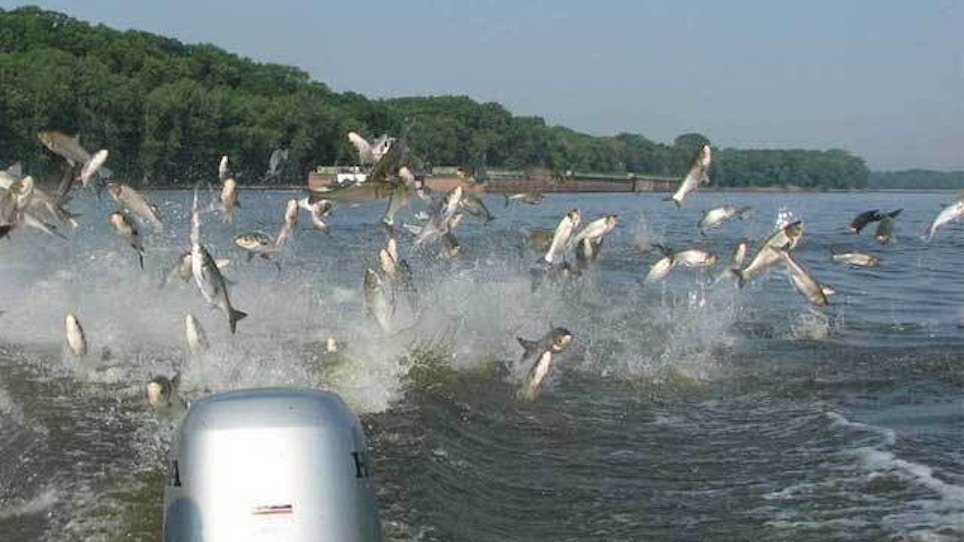 Bowhunters to shoot Asian carp on Illinois River