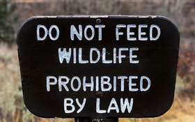Two Cases Show How Stupid, Sick People Are With Wildlife