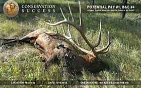 Boone and Crockett Confirms Potential World Record Elk
