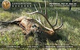 Boone and Crockett Confirms Potential World Record Elk