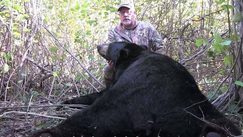 Video: Best Broadheads and Shot Angles for Black Bears