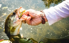 Think You Know All About Largemouth Bass? Take the Quiz!