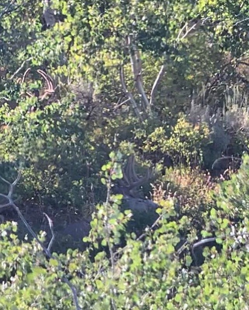 Can you spot the buck Tiffany is hunting? (PS: It's not the one in the upper-left side of the screen!)