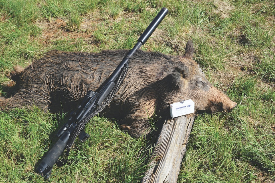 The .357 didn't have any problem dropping this wild hog with a 50-yard broadside shot.