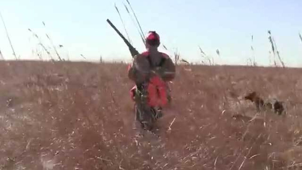 South Dakota Pheasant Numbers Up 42 Percent