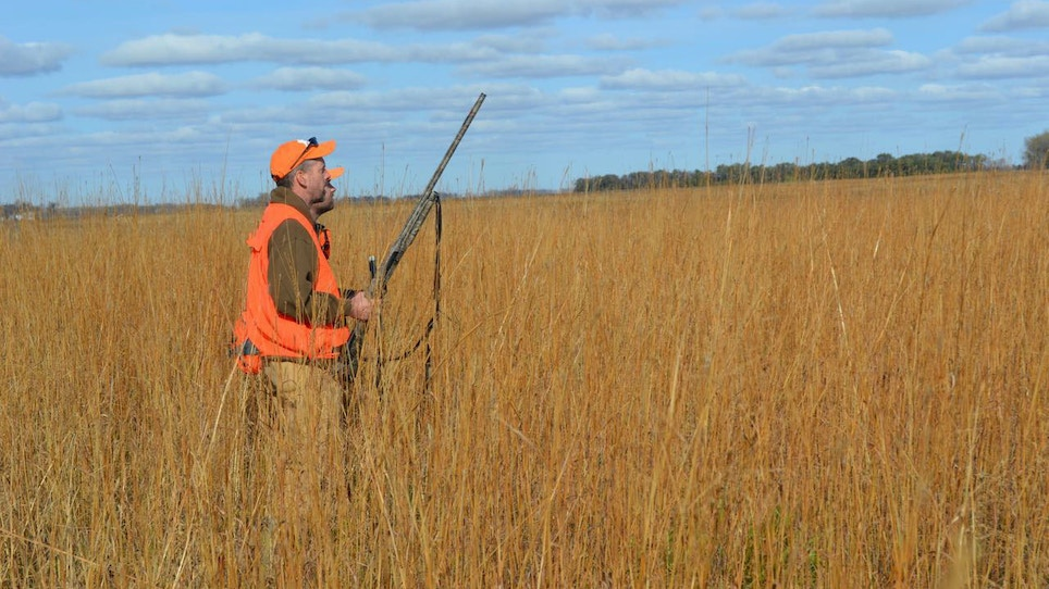 Favorable Weather Credited With Minnesota Pheasant Rebound