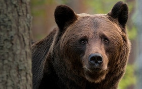 Win a 2020 Black Bear Hunt and Archery Prize Package