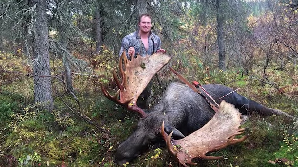 Video: Massive Alaska Moose Tagged With a Traditional Bow
